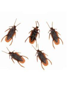 Leisial joke  bed bugs