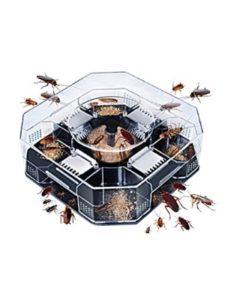 BESTONZON non toxic  bed bug killers