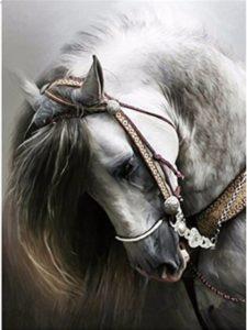 LIPHISFUN horse  set squares