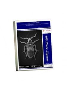 Mary Evans Prints Online juvenile  bed bugs