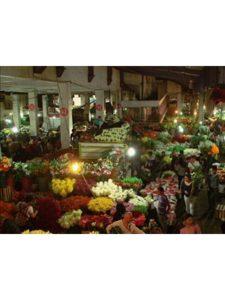 amazon historic center  mexico cities